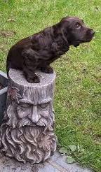 cute doggie stumped