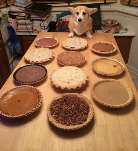 dog pies