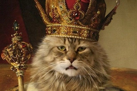cute cat wearing crown