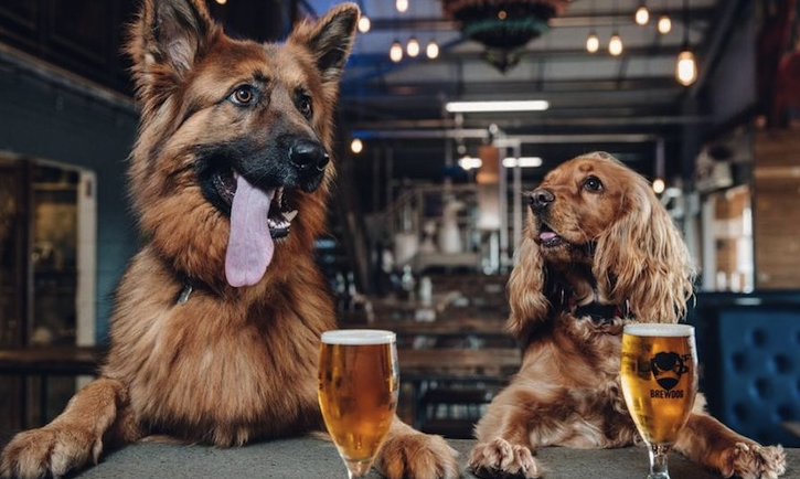 cute dogs beer