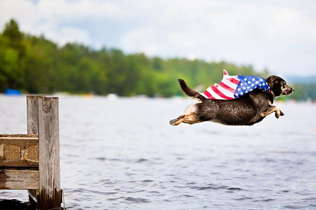 cute patriotic dog