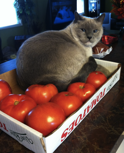 cute cat and tomatoes