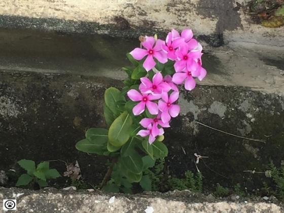 flowers bloom thru crack