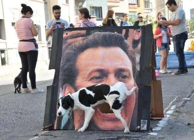 funny dog peeing