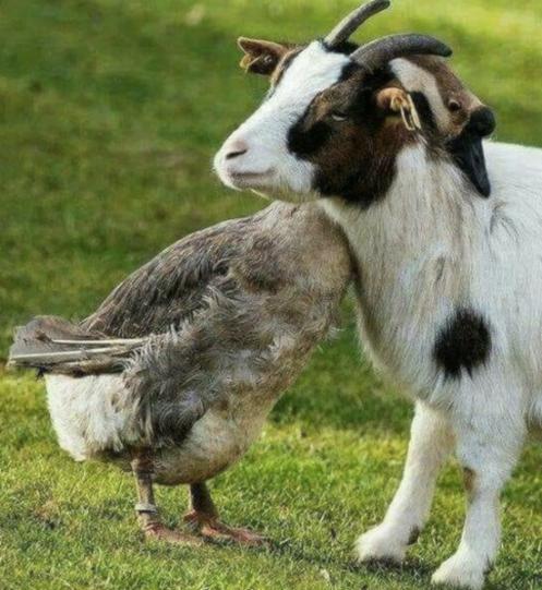 happy friendship