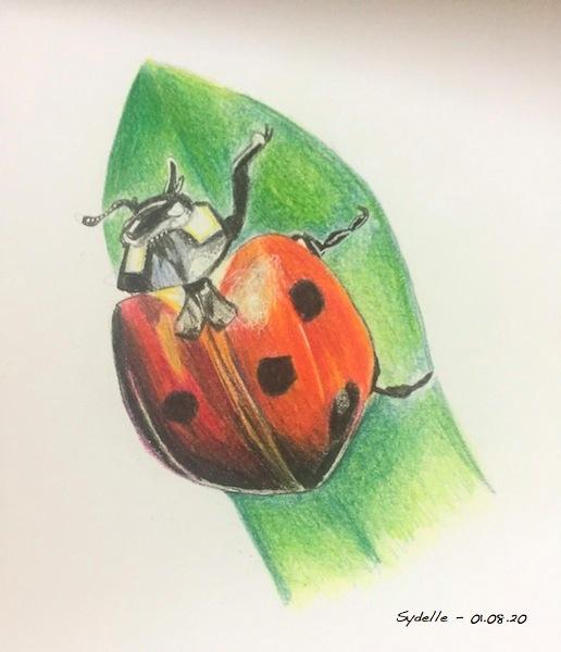 lady bug_sydelle