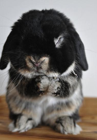 cute bunny praying.png